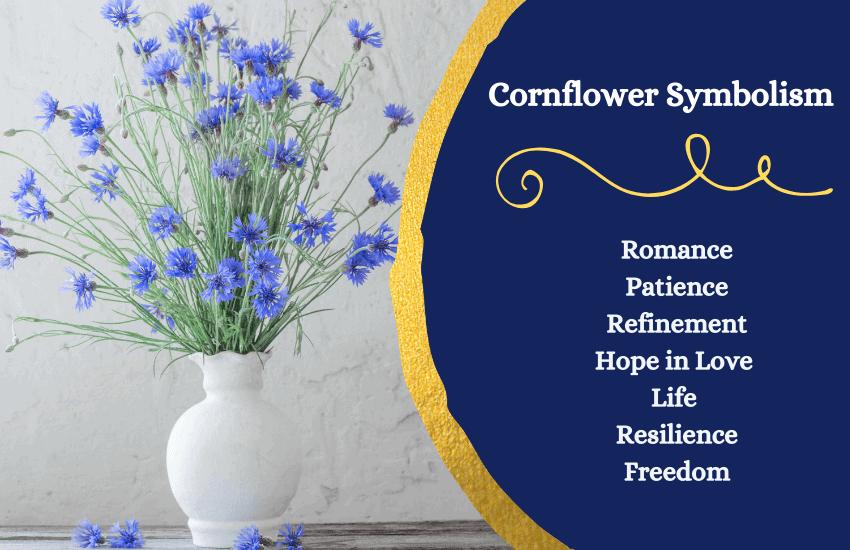 cornflower meaning