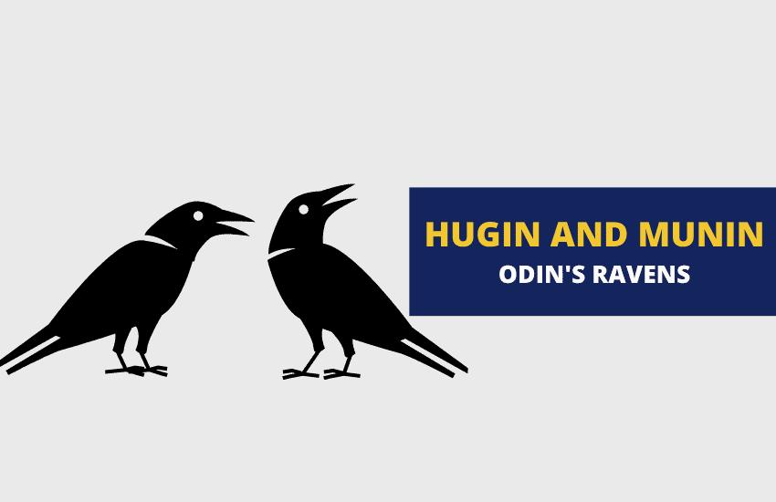 Hugin and Munin odin's ravens
