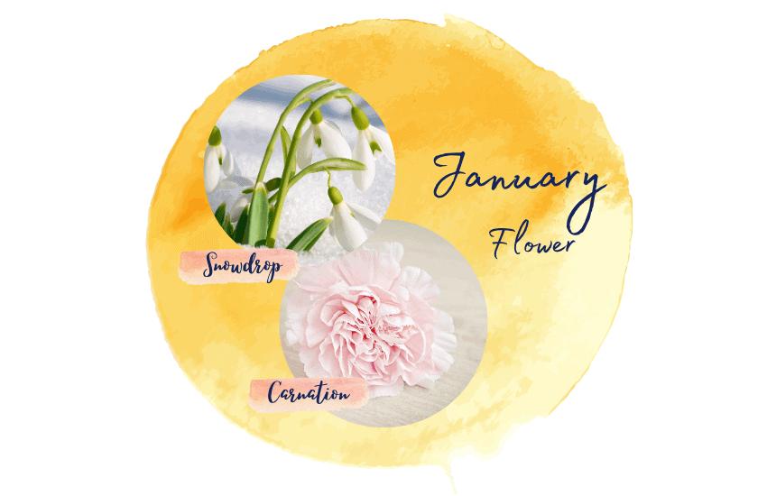 January birth flower