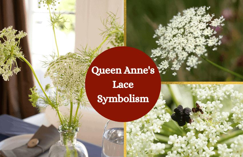 Queen Anne's lace symbolism