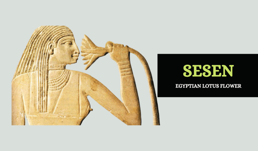 Sesen Egypt lotus