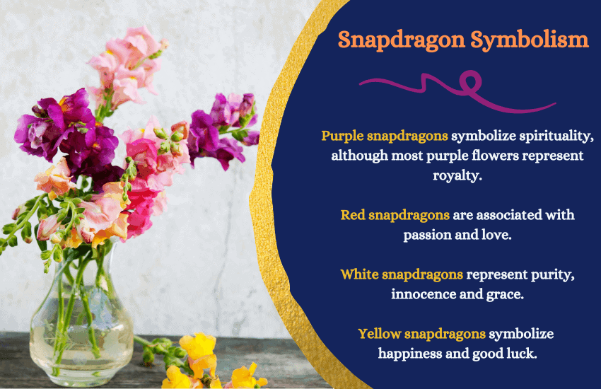 Snapdragon flower meaning