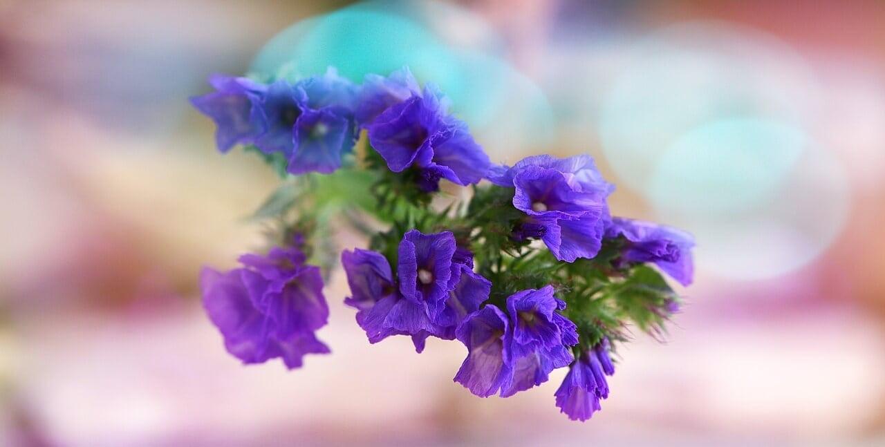 Statice sympathy flower
