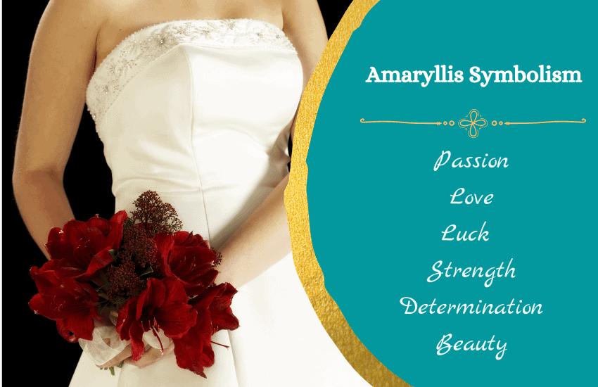 Symbolism of amaryllis