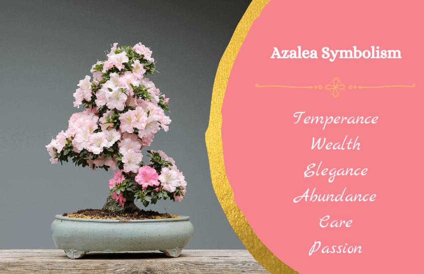 Symbolism of azalea