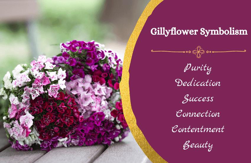 Symbolism of gillyflower
