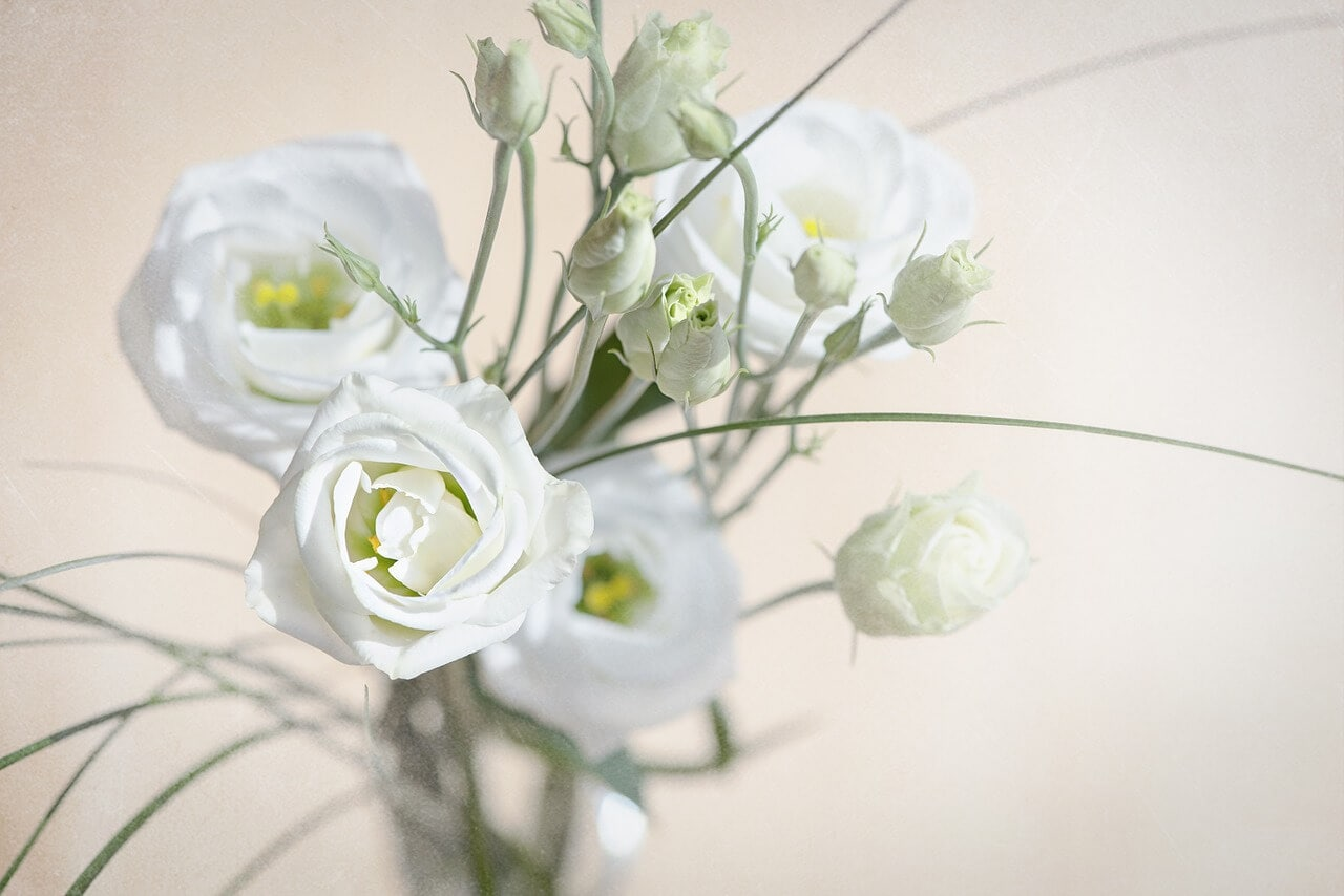 What is lisianthus