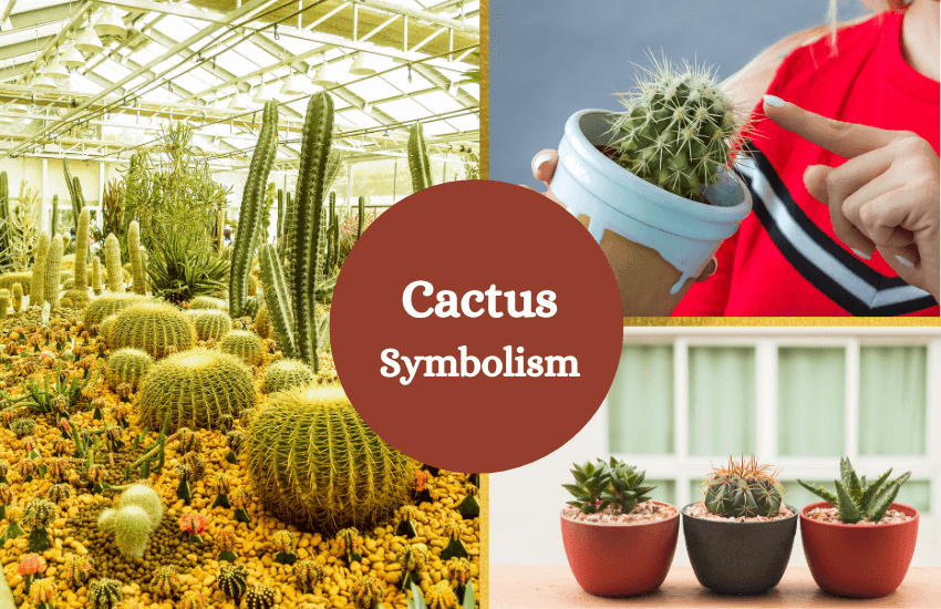 Cactus symbolism and meaning