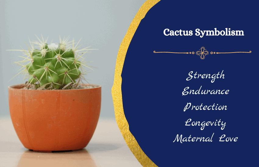 Symbolism of cactus
