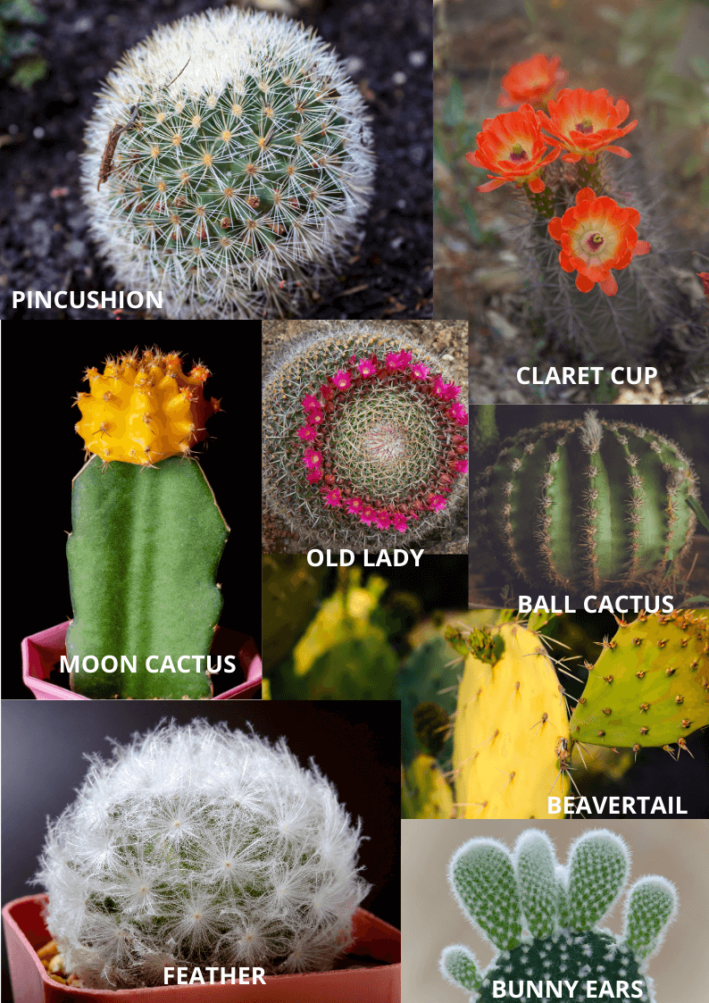 Various types of cactus