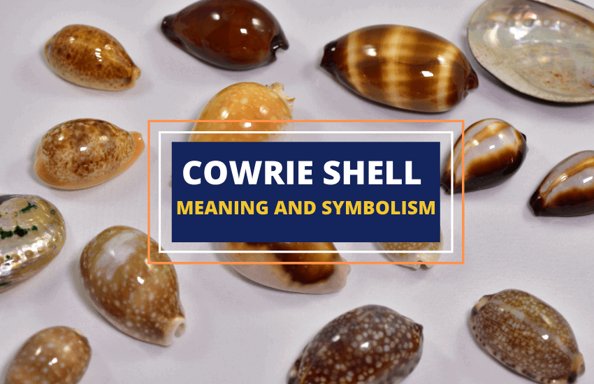 Cowrie shell meaning symbolism