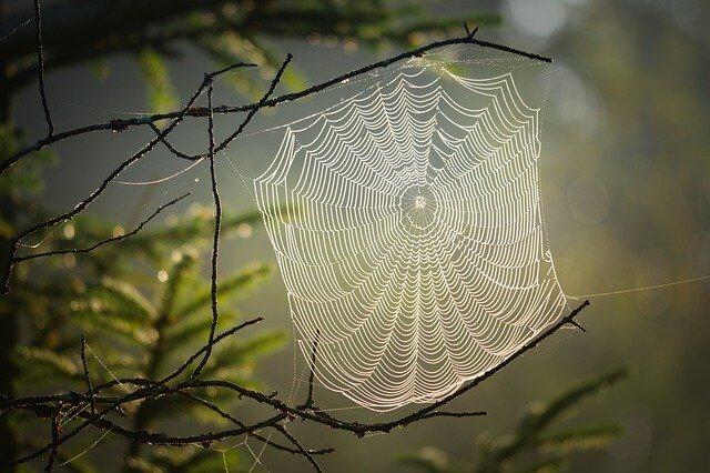 Mandala like spider we