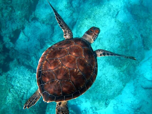 Turtle symbol of motherhood