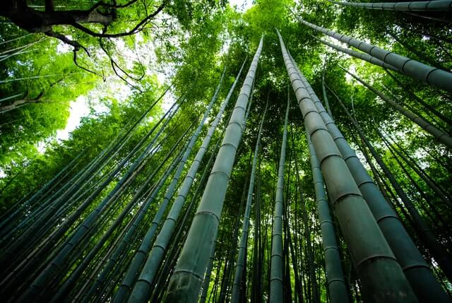 Bamboo symbolism meaning loyalty