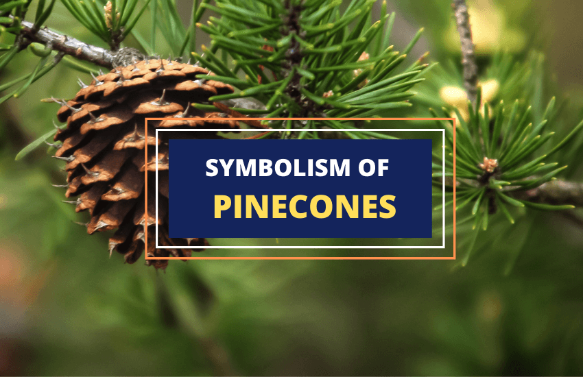Pine cone symbolism meaning guide