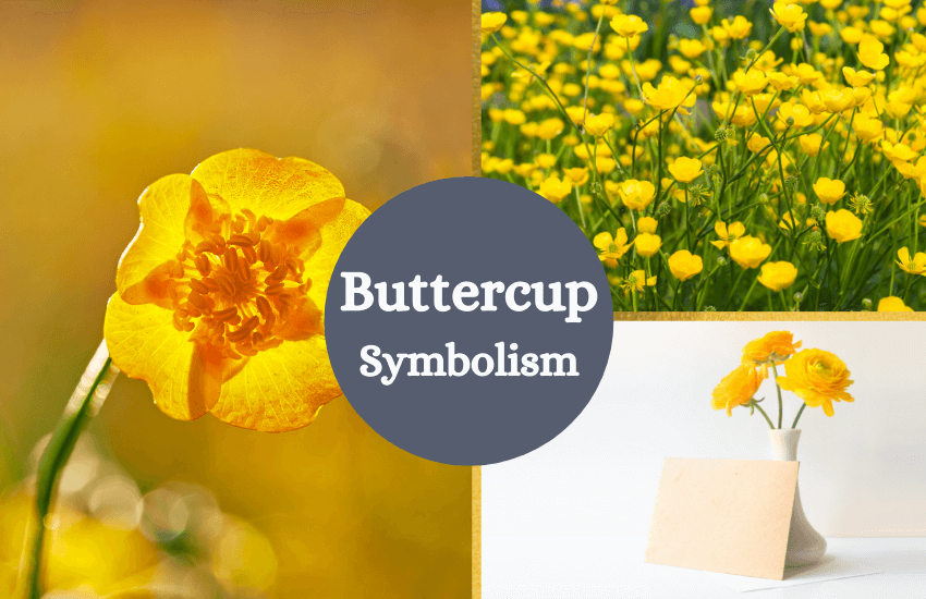 buttercup meaning symbolism