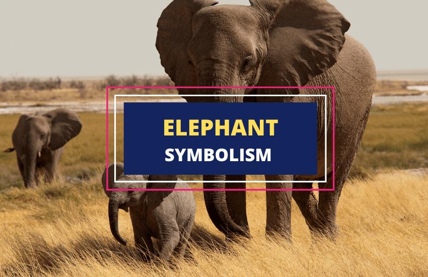 Elephant symbolism meaning