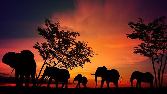 Elephants in dreams