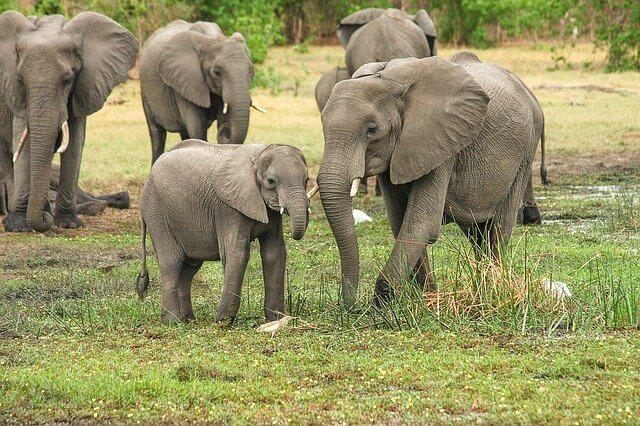 Elephants meaning