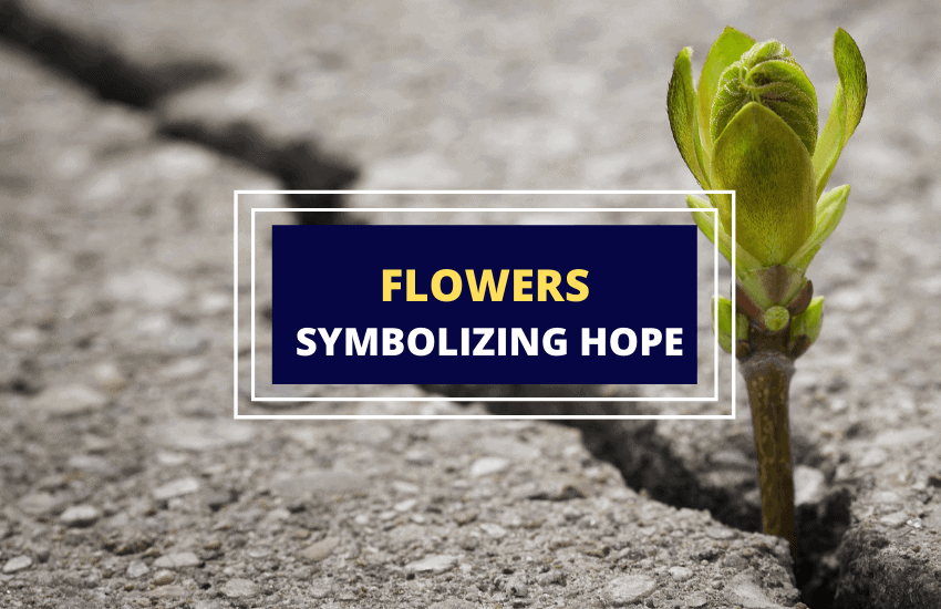 Flowers that symbolize hope