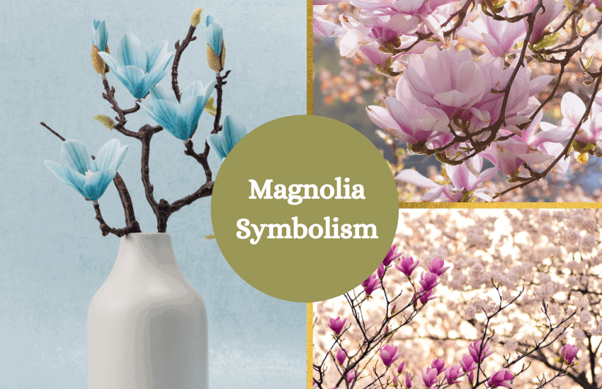 Magnolia symbolism and meaning