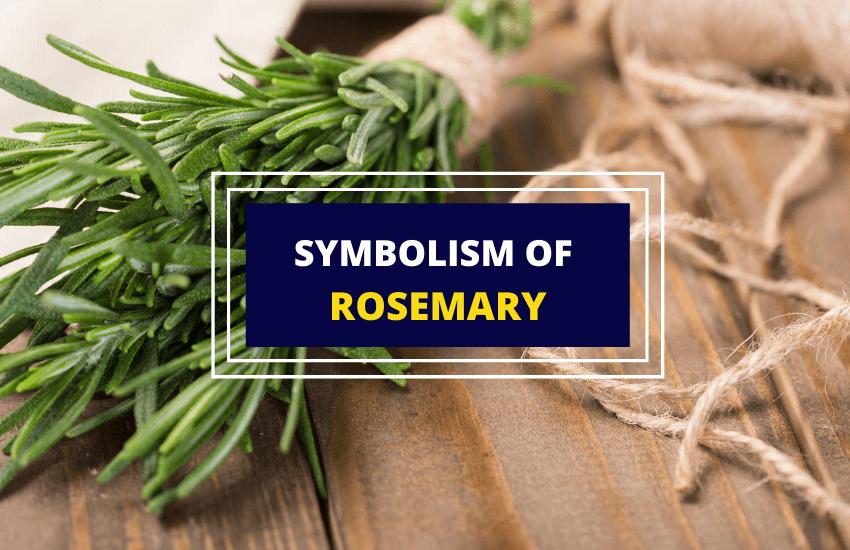 Rosemary herb symbolism