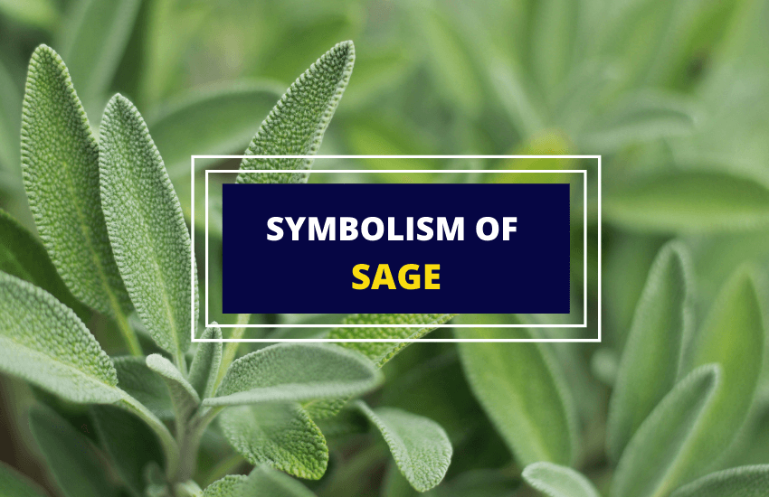 Symbolism and meaning of sage