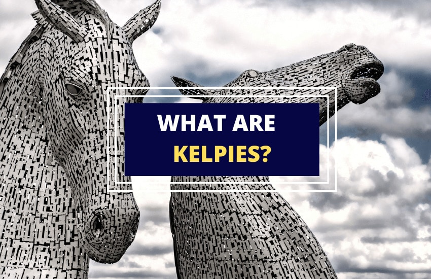 What are kelpies