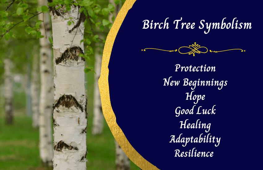 Birch tree meanings