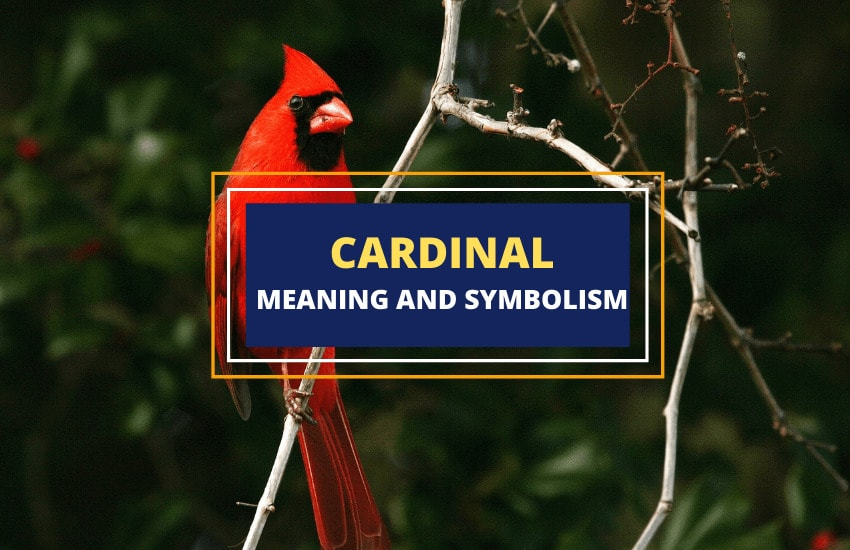 Cardinal symbolism and meaning