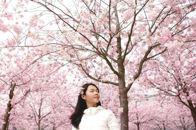 Cherry blossom meaning around the world
