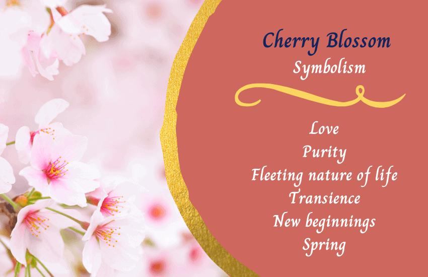 Cherry blossom symbolism