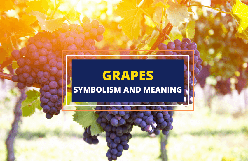 Grapes symbolism meaning