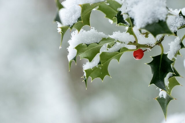 Holly snow meaning