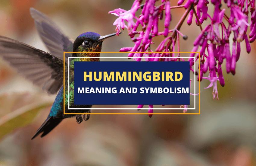 Hummingbird meaning symbolism