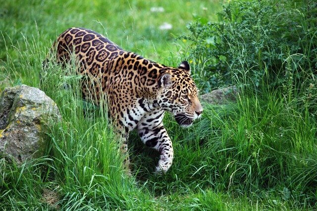 Jaguar Aztec views