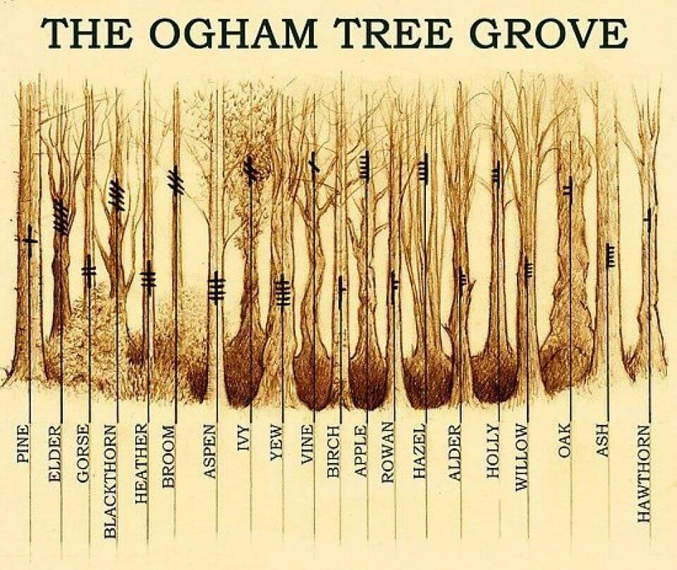 Ogham tree yuri