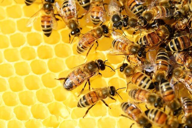Symbolism of bees