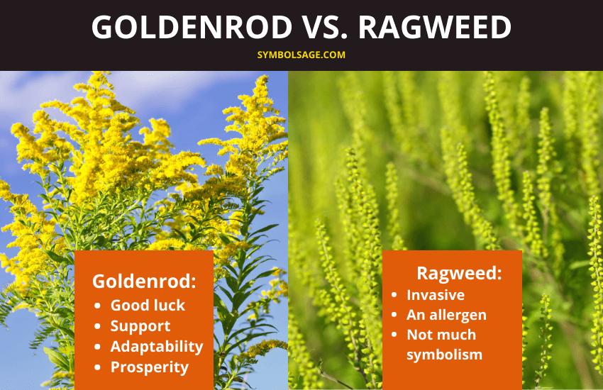 Symbolism of goldenrod and ragweed