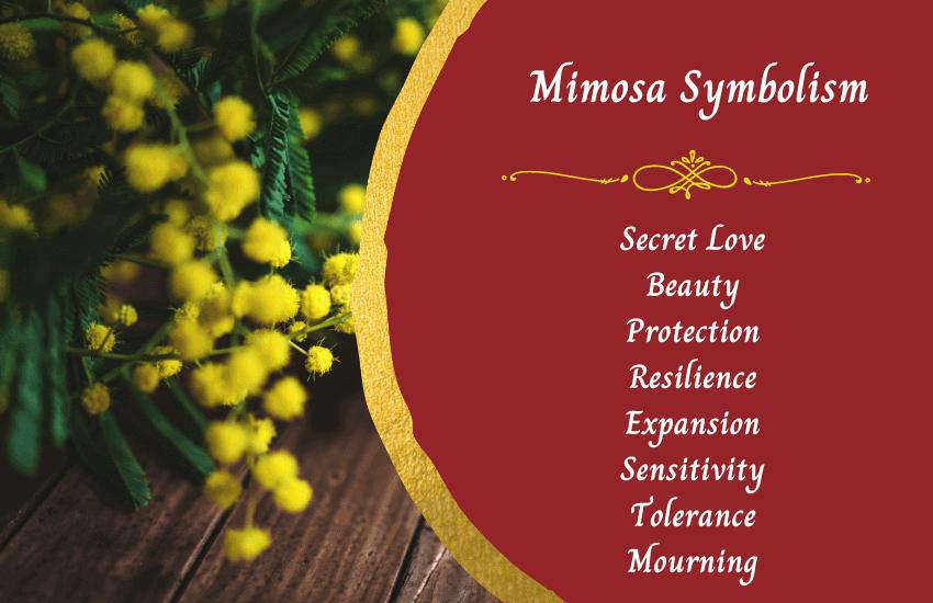 Symbolism of mimosa flower