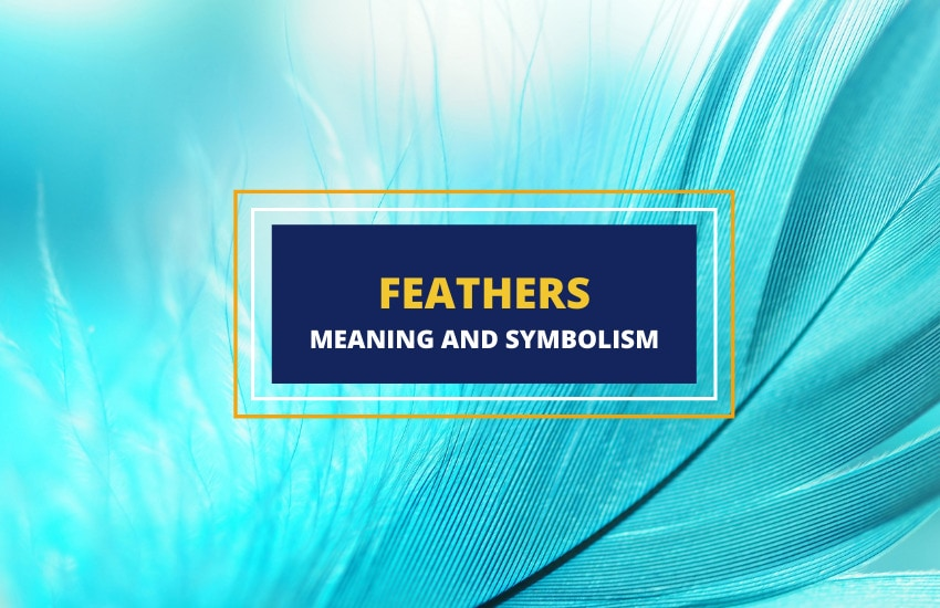 Feathers meaning and symbolism