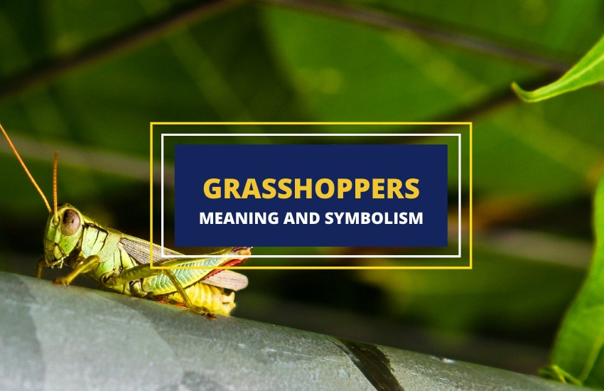 grasshopper meaning