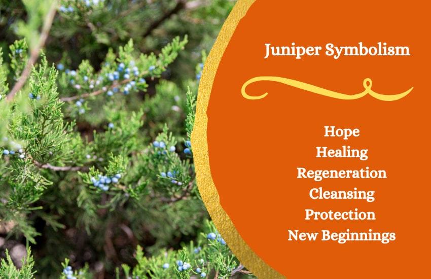 juniper tree symbolism