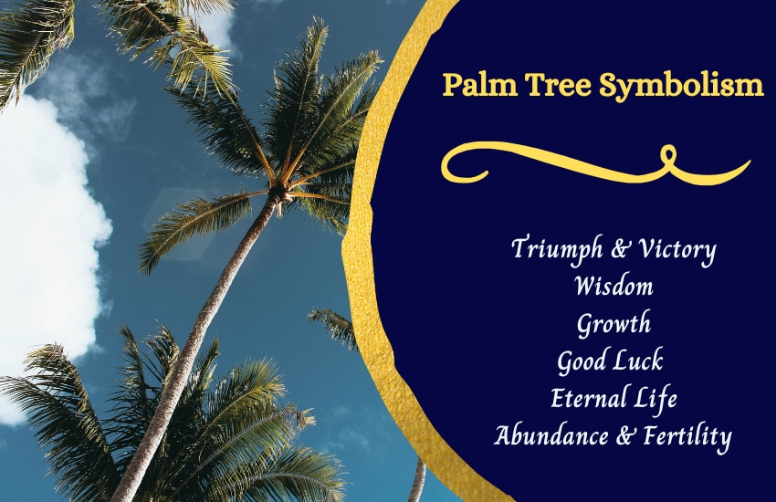 Palm tree meaning