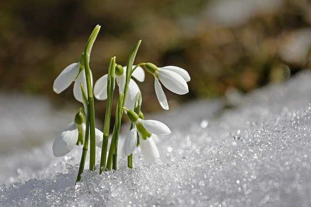 Spring imbolc symbols