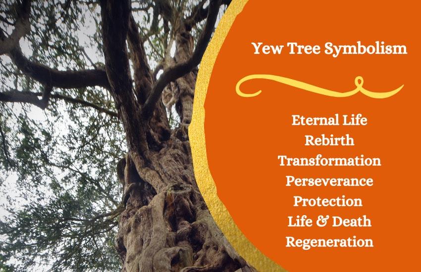 Yew Trees symbolism