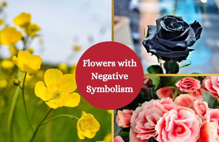 Flowers with Negative meaning