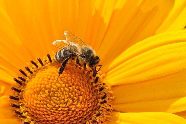 Bee Jupiter
