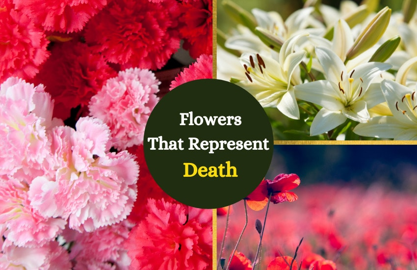 Flowers that represent death