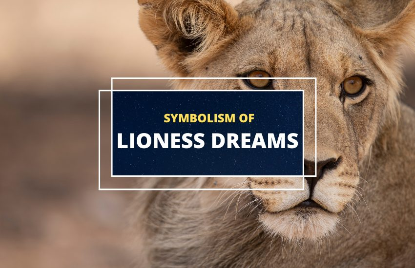 Lioness dream meaning